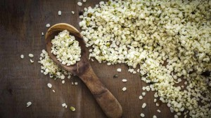 Récolte et conservation des semences