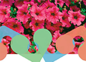 Distribution de fleurs