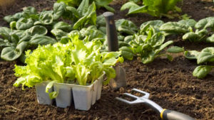Fabrication de fertilisants et de répulsifs écologiques